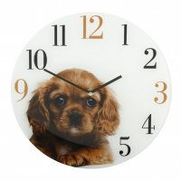 Friend Cavalier King Charles Spaniel